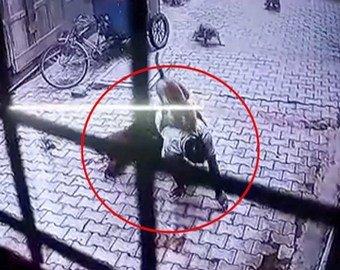 Нападение диких обезьян на мужчину попало на видео