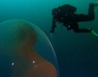 Капсула с яйцами кальмара шокировала интернет-пользователей