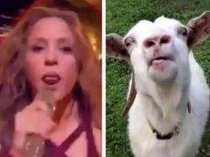 Выступление Шакиры на Супербоуле стало главным мемом соцсетей