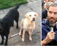 Спортивный комментатор на карантине переключился на собак