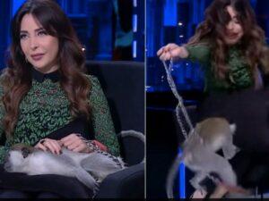 На телеведущую в прямом эфире напала обезьяна