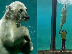Медведь поиграл со смотрителем в бельгийском зоопарке